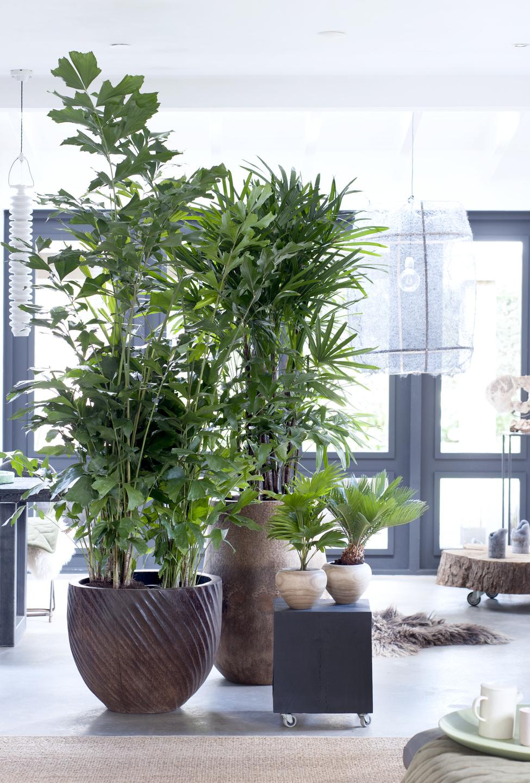 Exklusive Palmen Zimmerpflanzen Des Monats Februar Blumenburo