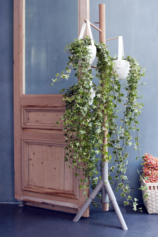 Efeu Zimmerpflanze april 2015 der efeu ist die zimmerpflanze der monats blumenbüro