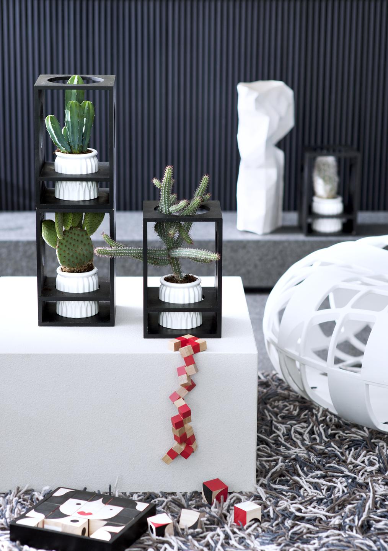 august 2016 kakteen zimmerpflanzen des monats blumenb ro. Black Bedroom Furniture Sets. Home Design Ideas