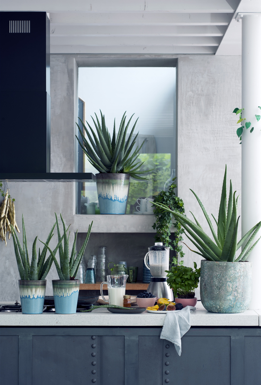 aloe zimmerpflanze des monats august 2017 blumenb ro. Black Bedroom Furniture Sets. Home Design Ideas