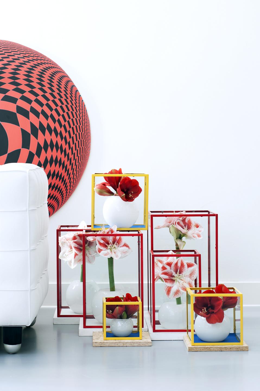 winterlicher blumenklassiker zeigt moderne seite das. Black Bedroom Furniture Sets. Home Design Ideas