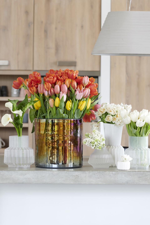 Die Tulpe Steht Im Januar Auf Der Blumenagenda Blumenbüro