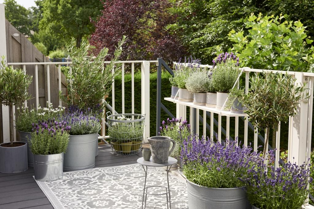 balkonpflanze des jahres 2018 lavendel blumenb ro. Black Bedroom Furniture Sets. Home Design Ideas