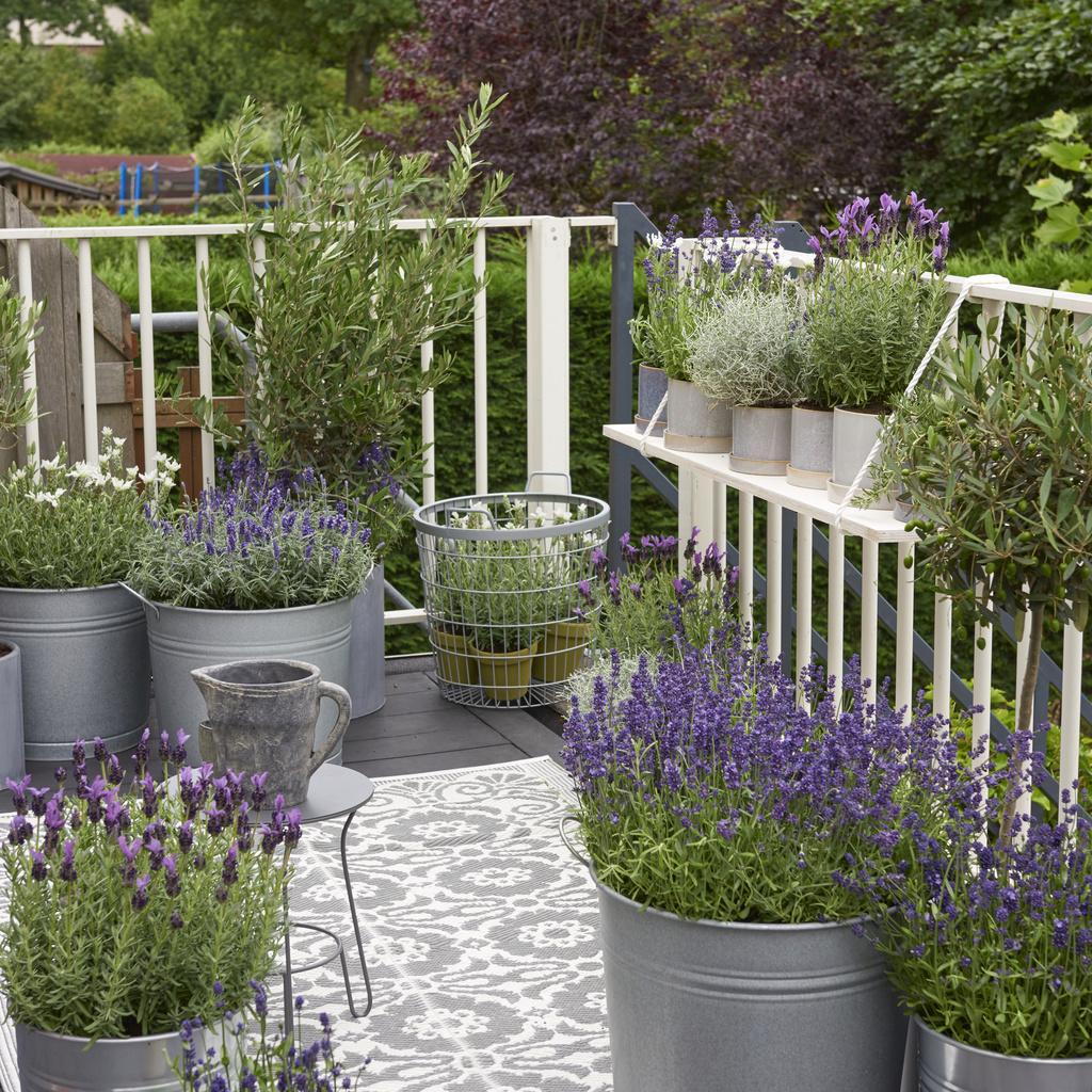 Sympathisch Balkonkästen Bepflanzen Beispiele Beste Wahl Pattern Image