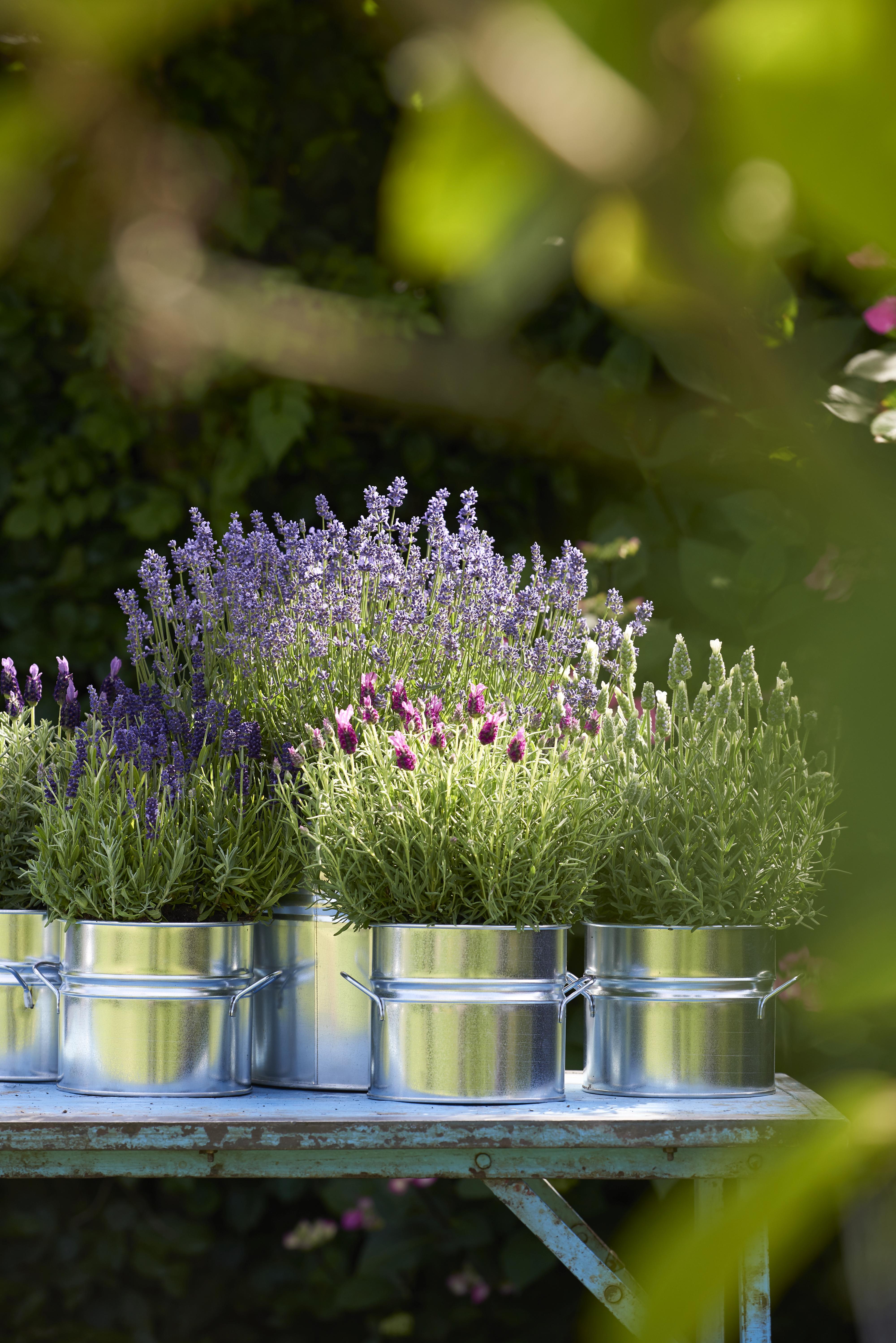 Blickfang Balkonkästen Bepflanzen Beispiele Ideen Von Wahl
