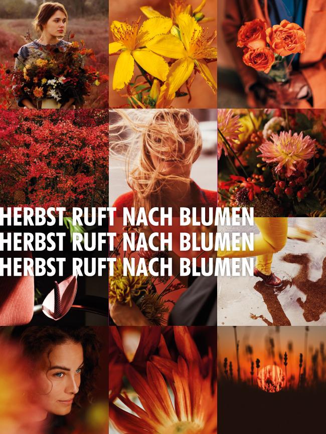 """Content-Kampagne """"Herbst ruft nach Blumen"""""""