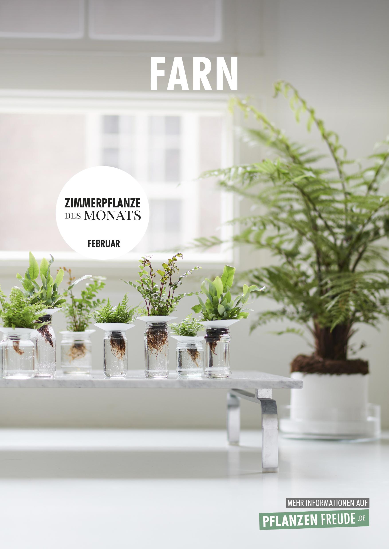Farn Zimmerpflanze Des Monats Februar 2019 Blumenburo