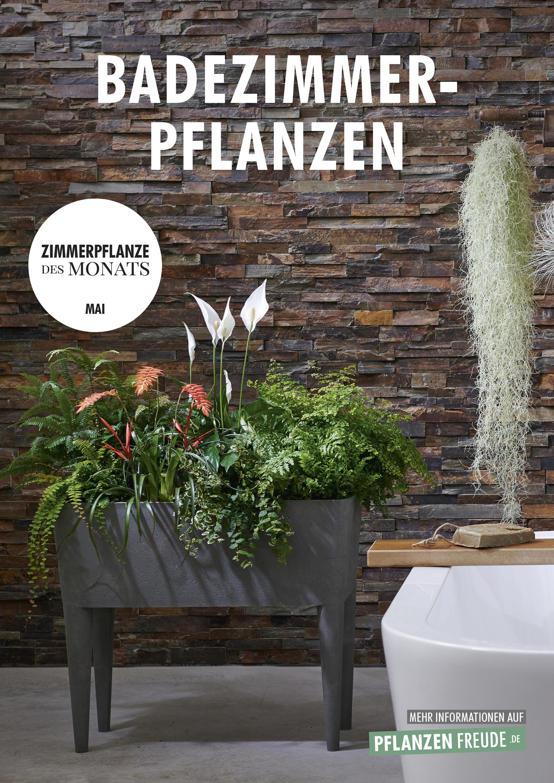 Badezimmerpflanzen Zimmerpflanzen Des Monats Mai 2019 Blumenburo