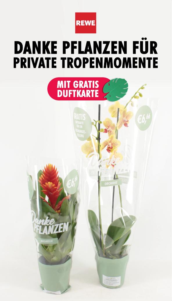 Shopper activatie bromelia en orchidee bij REWE