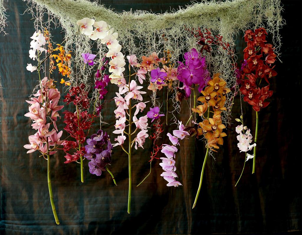 Positive Energie Im Haus Mit Der Feng Shui Meisterin Orchidee