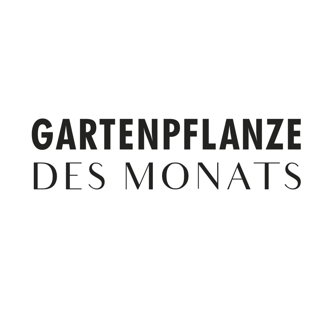Gartenpflanze des Monats 2019