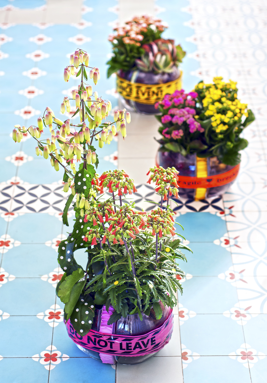 Zimmerpflanzen Des Monats Juli Bis Dezember 2017 Lebendigkeit Im