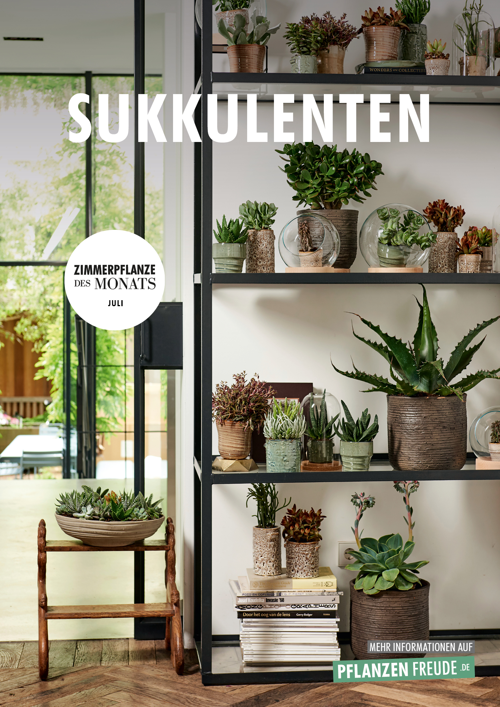 Sukkulenten Zimmerpflanzen Des Monats Juli Blumenburo
