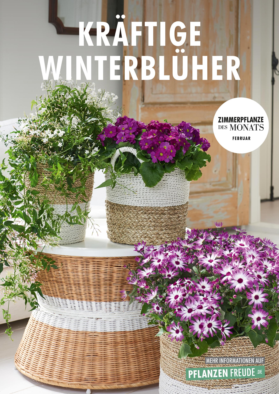 Winterblüher, Zimmerpflanzen des Monats Februar 2018
