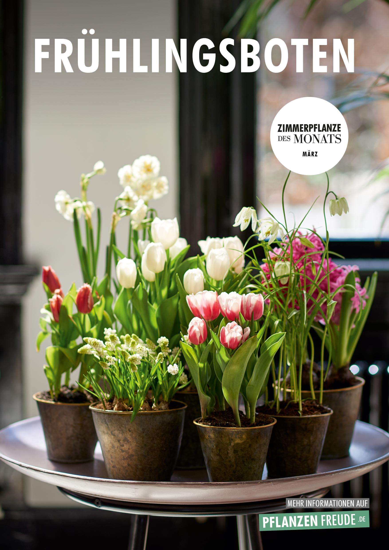 Fruhlingsboten Zimmerpflanzen Des Monats Marz Blumenburo