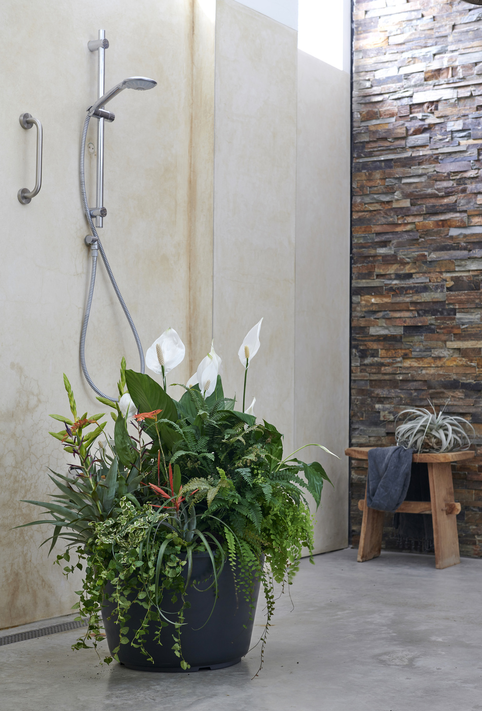 Badezimmerpflanzen Zimmerpflanzen Des Monats Mai 2019 Blumenbüro