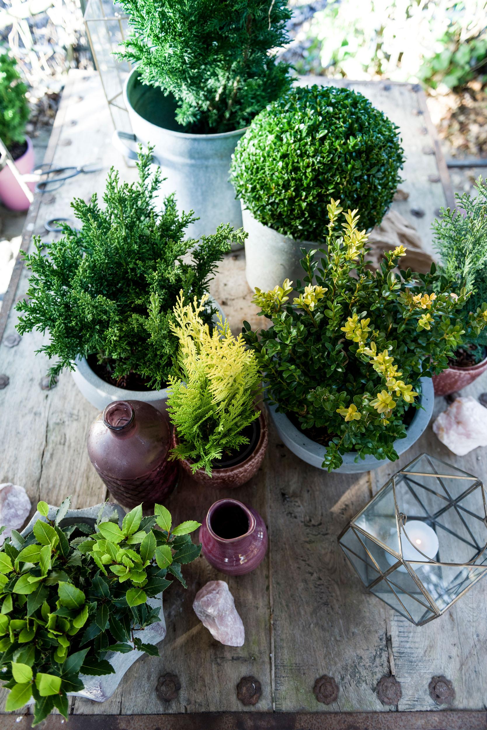 Einzigartig Garten Pflanzen Schema